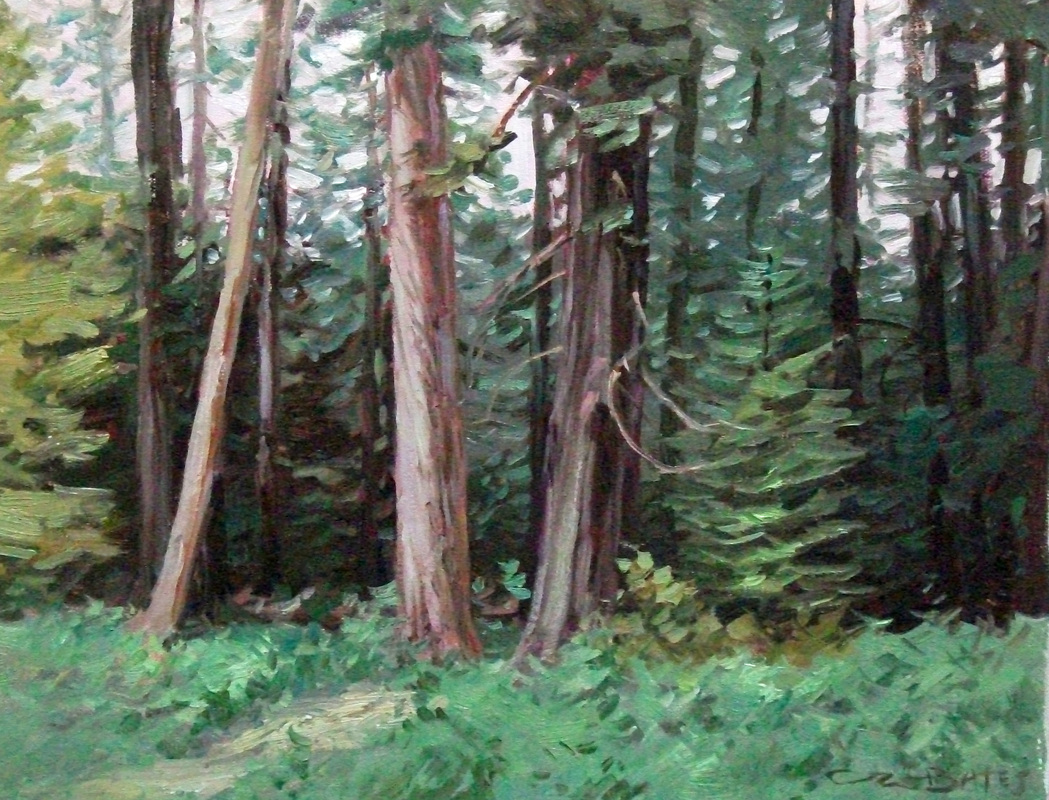 #776 Cathedral Grove